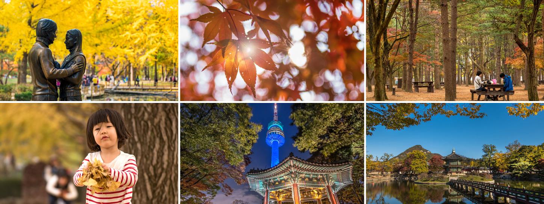 Autumn in Seoul - Autumn in my heart... รีวิวท่องเที่ยวเกาหลีโดยสมาชิก KTC World Webboard คุณ Neju